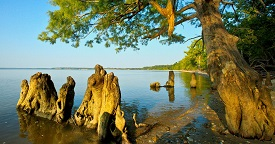 Chippokes Plantation State Park - RV Park of Surry, VA